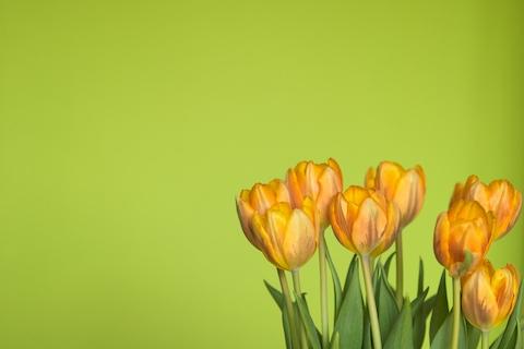 Frühlingsgruß mit neuem Grün